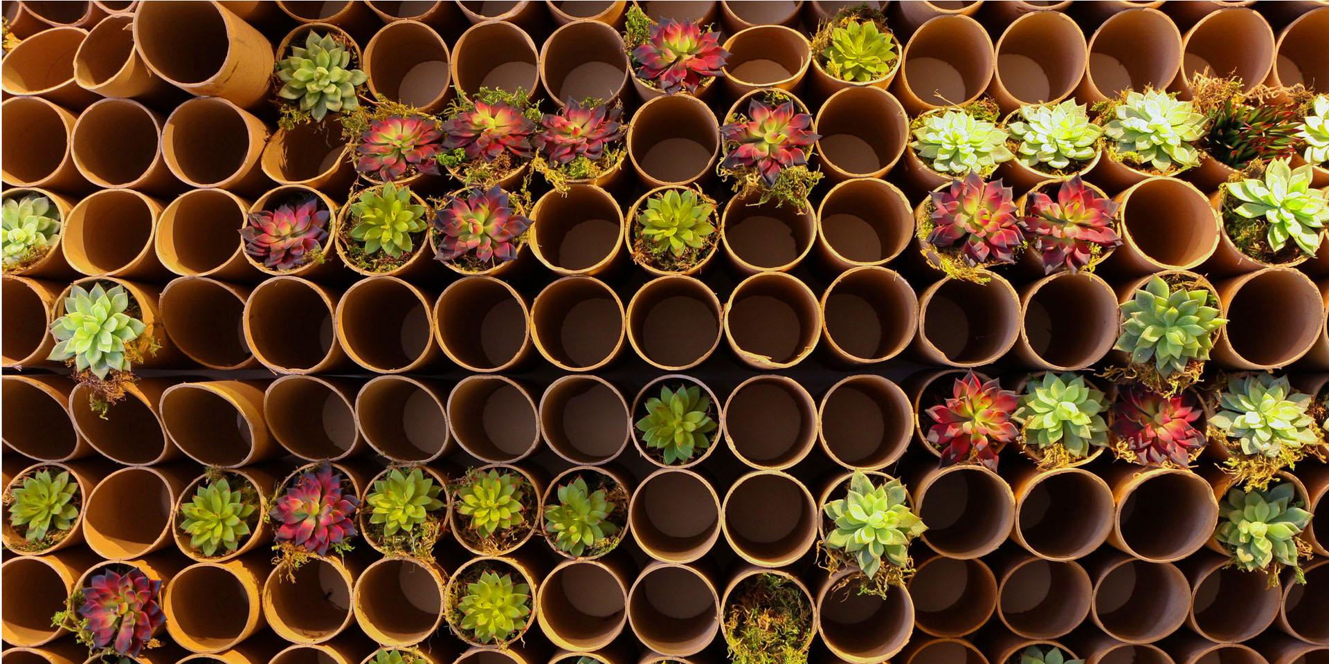 tube flowers